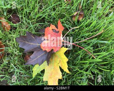 Autumn Approaching - Stock Photo