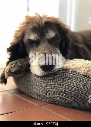 Let sleeping dogs lie - Stock Photo