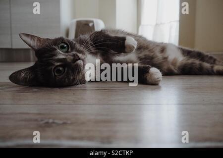 Cat lying down - Stock Photo