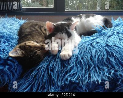 Brother & sister in deep sleep - Stock Photo