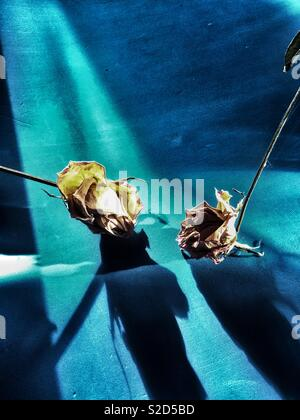 Dried daffodil and rose isolated - Stock Photo