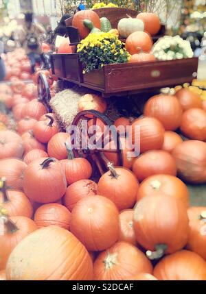 Pumpkins and Gourds in Adam display in midtown Manhattan, NYC, USA - Stock Photo