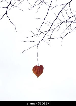 A solitary heart-shaped leaf hanging from a bare tree branch. - Stock Photo