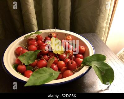Crabapples in a Bowl - Stock Photo