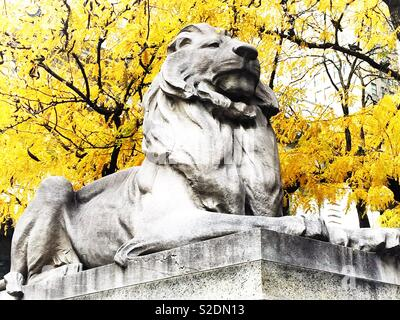 Fortitude the library lion statue in front of the main New York public library on fifth Avenue in front of a vibrant yellow tree on in autumn afternoon, NYC, USA - Stock Photo