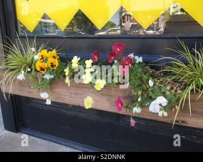 Sunny spring planter window box on shop front in America filled with spring flowers including yellow , lemon and pink mixed daisies and ornamental grass shrubs under yellow bunting on street - Stock Photo