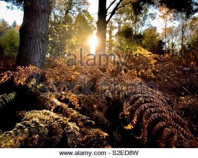 Autumn Sun - Stock Photo