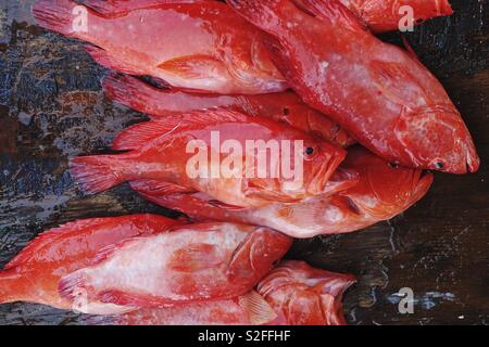 Fish: red snapper on a brown table. Ready for sale, fresh from the sea - Stock Photo