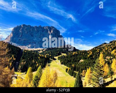 View on Sassolungo, coming from Selva di Val Gardena, South Tyrol, North Italy, Europe, Autumn Colors, Larch Trees - Stock Photo
