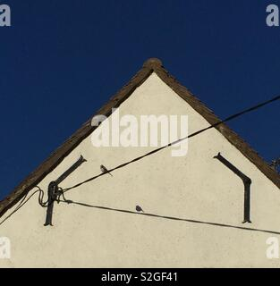 Bird on a wire. Shadow of a bird sitting on a telephone wire against a white house wall. - Stock Photo