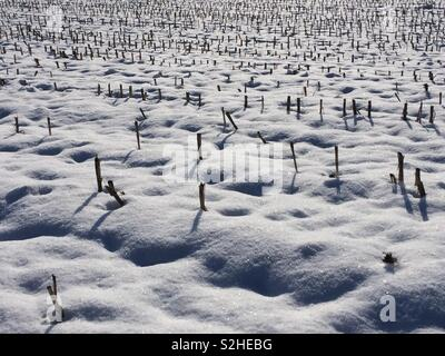 """""""Amazing"""" pattern in the snow - Stock Photo"""
