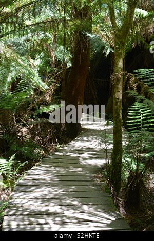 A section of trail along the Mait's Rest rainforest walk - Stock Photo