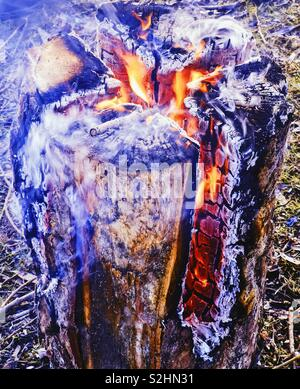 Swedish fire log burning, Sweden,Scandinavia. The logs are vertically cut and set on fire. The fire is self feeding and the log burns from inside out. The fire can last for up to 5 hours. - Stock Photo