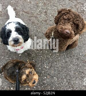 Sausage time for Daisy, Henry and Dora - Stock Photo