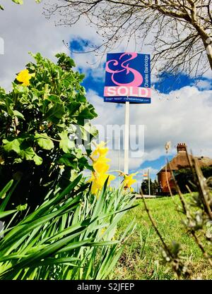 Successful spring house sales. Sold sign behind daffodils - Stock Photo