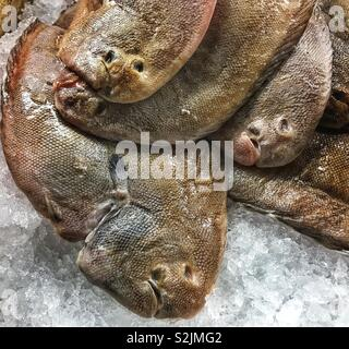 Fresh Dover sole fish on ice - Stock Photo