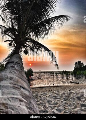 Laying on a fallen palm tree, gazing at the sunset above the sea. - Stock Photo