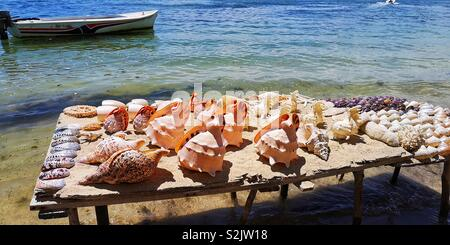 Selling shells on the beach