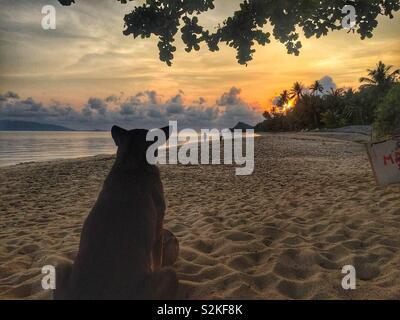 Dog on the beach looking towards beautiful sunrise in Koh Samui, Thailand - Stock Photo