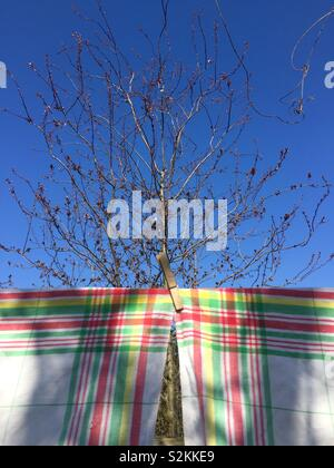 Washing line in early spring. Vintage french tea towels in the sunshine. Linen fabric. Red, green and yellow check on white background. From The market in Clignancourt, now on a washing line in London - Stock Photo