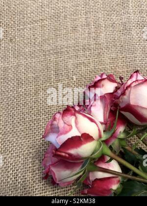 Roses on burlap cornered for card design - Stock Photo