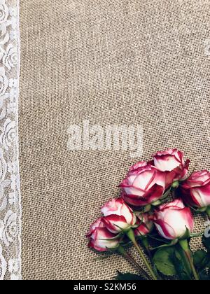 Roses on burlap with lace accent isolated - Stock Photo
