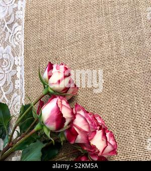 Roses on burlap with lace accent card design - Stock Photo