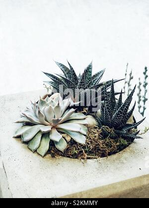 Airy image of succulents in a stone pot in front of a window creating a brightly lit white background