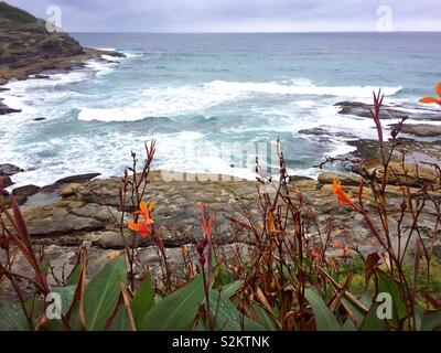 Coastal flowers at Tamarama - Stock Photo