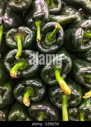 Full frame of fresh delicious ripe green poblano peppers on display and for sale at the local produce market. - Stock Photo