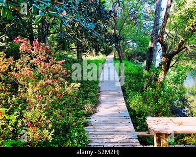Wooden boardwalk leading through Woods along side shrubs and flowers - Stock Photo