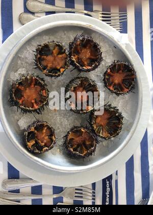 Sea urchins Ricci crudi gourmet meal dish restaurant lifestyle high end luxury living - Stock Photo