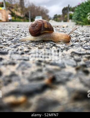 At a snails pace - Stock Photo