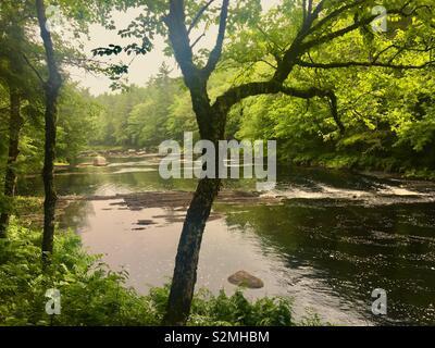 River with trees in Kejimkujik National Park Nova Scotia Canada - Stock Photo
