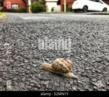 """Nearly home"" - a snail on a pavement in a residential street with homes in the background - Stock Photo"