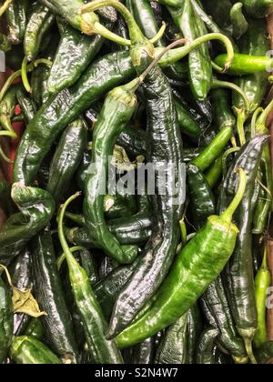 Full frame of fresh green poblano peppers piled high at the local produce market. - Stock Photo