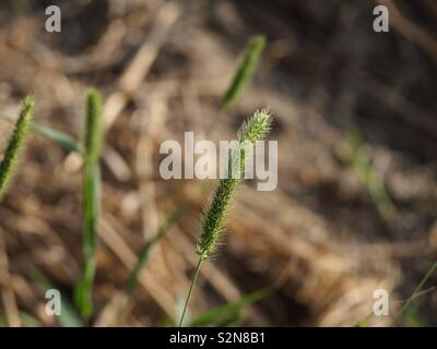Gras in Nahaufnahme - Stock Photo