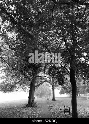 Black and white photo of a path through trees in a park - Stock Photo