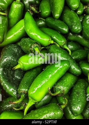 Full frame of many fresh green ripe poblano peppers. - Stock Photo