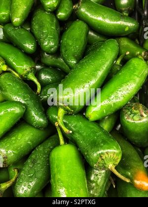 Full frame of many fresh green ripe poblano peppers. - Stock Photo