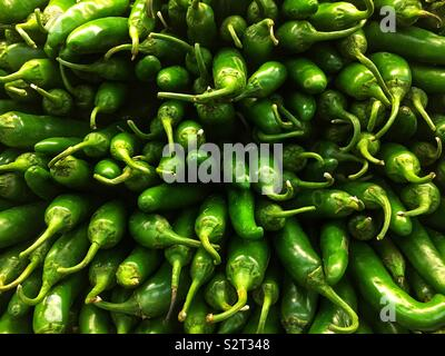 Stack of farm fresh delicious tasty green poblano peppers. - Stock Photo