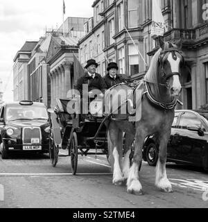 Horsepower - Stock Photo