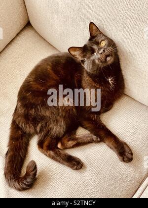 Rescue cat with one eye rustic looking shot - Stock Photo