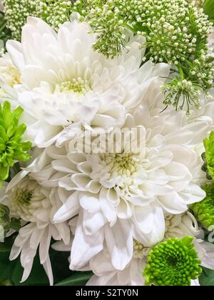 Beautiful summer flower bouquet of white chrysanthemums surrounded by light green foliage. - Stock Photo