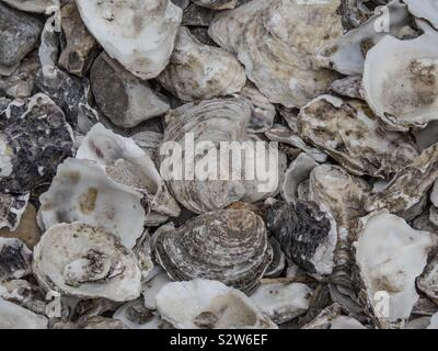 Oyster Shells - Stock Photo