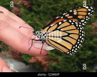 A monarch butterfly on a woman's finger.