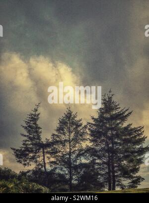 Outline of fir trees against a dramatic cloudy sky. - Stock Photo