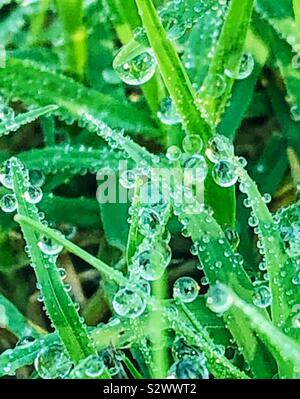 Morning dew on the grass - Stock Photo