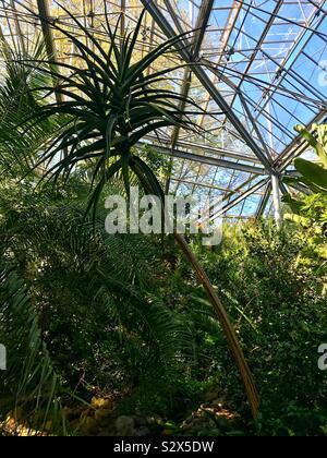 Hortus botanicus botanical gardens Amsterdam - Stock Photo