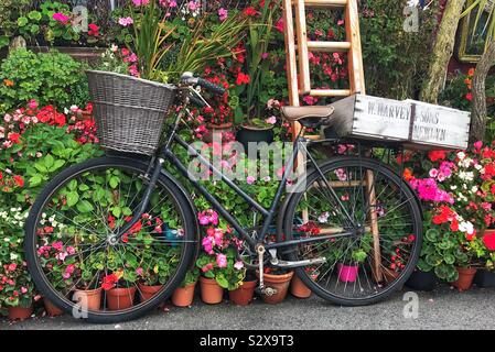 Bicycle with a Front Wicker Basket and Wooden Crates On The Back Outside a House with Potted bedding plants - Stock Photo